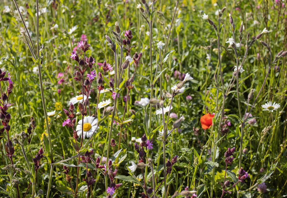 Biodiversity – Sustainable Drainage Systems